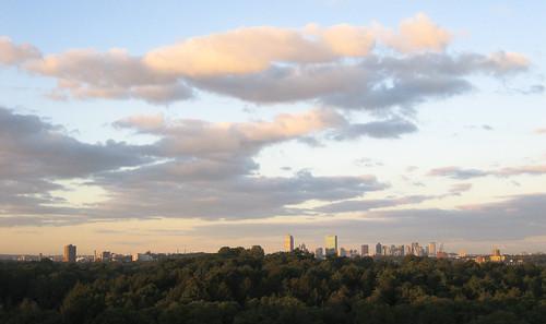 city trees boston skyline clouds landscape arboretum arnoldarboretum