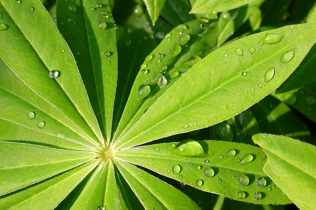 Greendrops