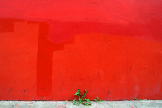 Red Wall | by fotologic