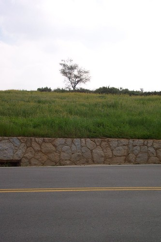 road color tree grass redlands