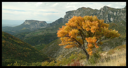 Foret de Saou, un arbre doré... / Soau forest, a golden tree...