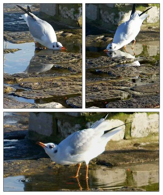 Drink - A gull's tale