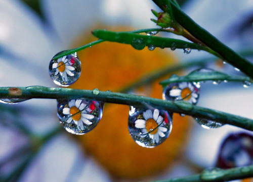 leftover drops   by Steve took it