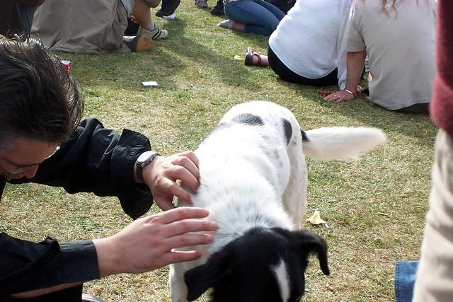 dog flea checking