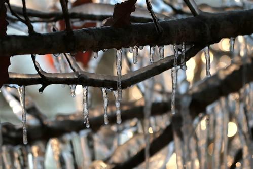 morning winter cold ice freeze icestorm winterwonderland mrgreenjeans gaylon selfgeneratedfotoop cajunicestorm uploadedforpartofaset gaylonkeeling
