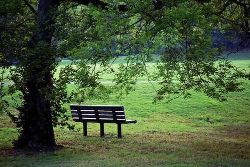 Lonely Park Bench Denise Rosser Flickr