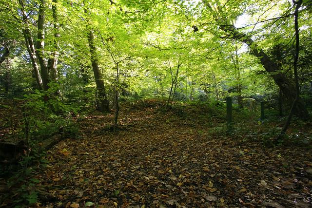 Dulwich Woods