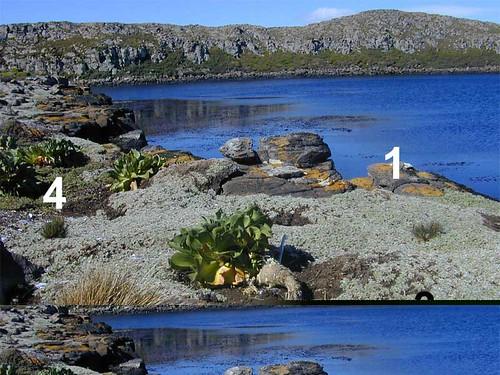 voyage geotagged côte lichen végétation kerguelen stationalpinejosephfourier geo:lat=49329597 geo:lon=7018753