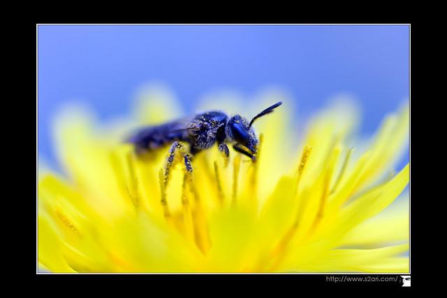 macro insecte par karim saari - photographe marseille
