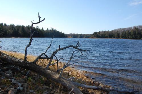 trees landscapes october michigan lakes driftwood sylvaniawilderness ottawanationalforest deerislelake