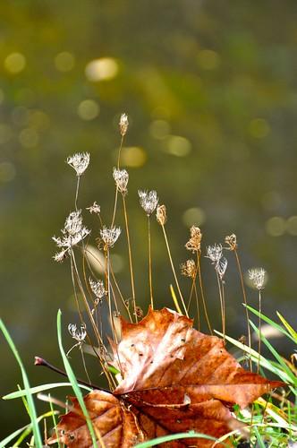 autumn brown sunlight macro green grass leaf flora colorful bokeh pennsylvania 2010 delawarecanal toryporter