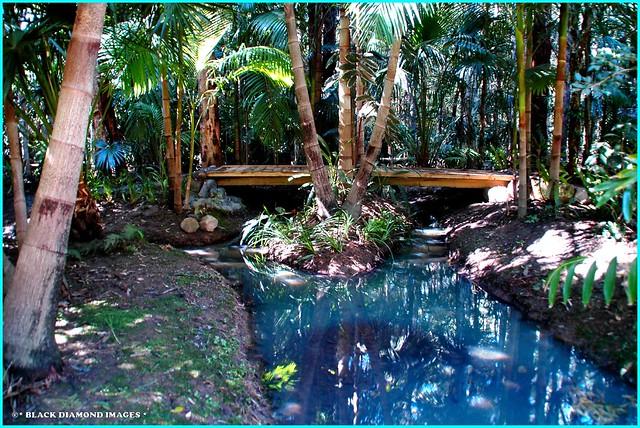 Bangalow Creek, Raintrees Native and Rainforest Gardens, Hallidays Point, NSW