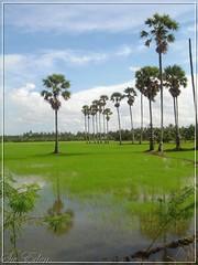 Nonthaburi Farm | by The SW Eden (สว อิเฎล)