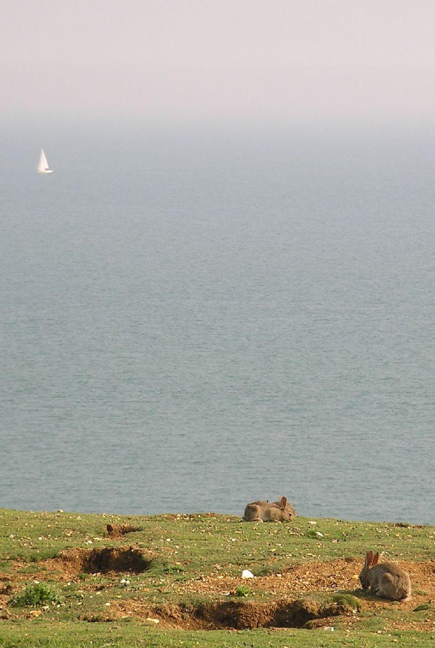 Book 1, Walk 31, Glynde to Seaford 5 Bunnies eroding the cliffs near Seaford Head, 10 June '07.