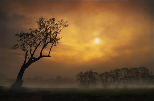 trees mist fog sunrise lakedistrict cumbria ullswater pooleybridge