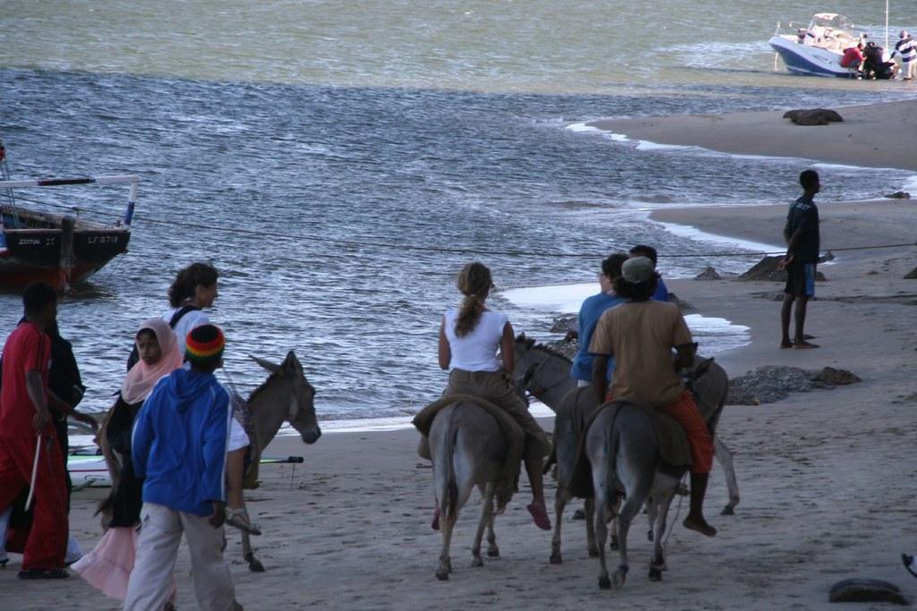 Donkeys beach