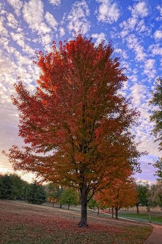 park autumn tree fall nature sunrise nikon fallfoliage kansas wichita hdr photomatix d300s collegehillpark