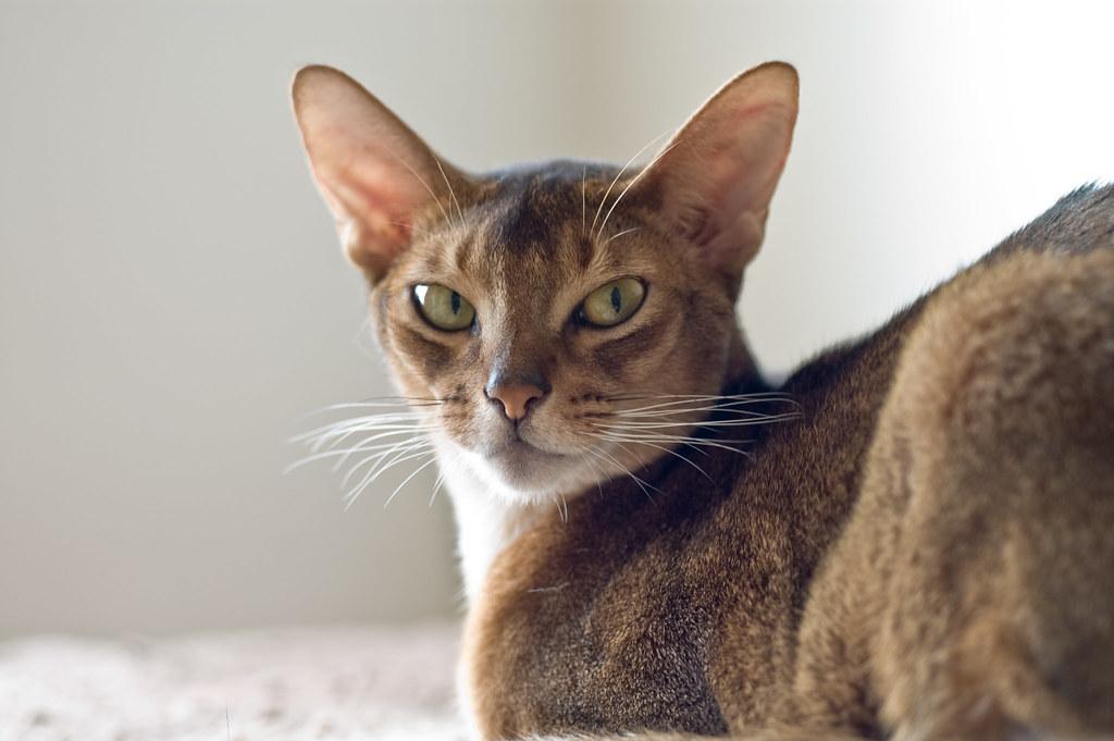 Truman, portrait of a young man/cat
