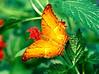 Penang Butterfly Farm