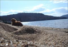 Sur-le-sable