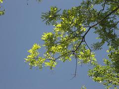 midori in the sky