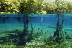 Aquario Natural de Bonito