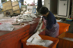 Carne de tubarao-baleia