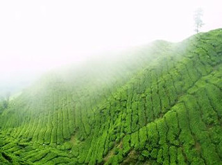 Cameron Highlands, Pahang | by Amazing Tourism Malaysia