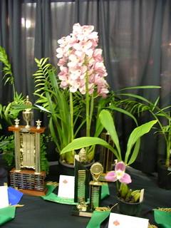 Bunbury Orchid Show