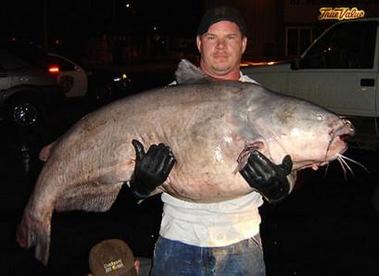 bigcatfish