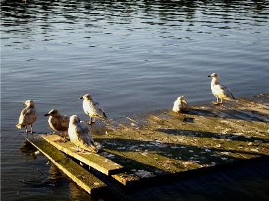 seagulls-tld