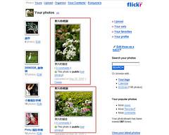 flickr_41