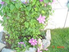 pool May 27,2005 003