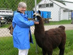 mim with llama