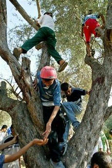 tree_climbers