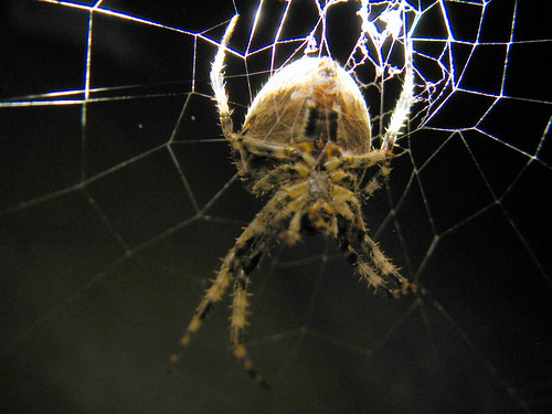 Spider | by Roo Reynolds