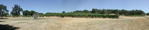 panorama winery amador montevina