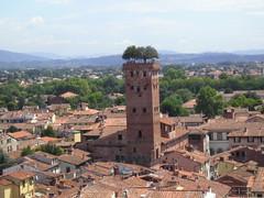 Lucca, Torre dei Guinigi | by alexandros80