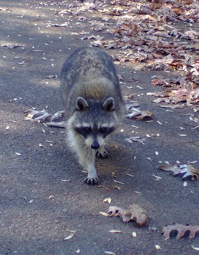 baysmountain kingsport tn tennessee wolves racoon deer turtle wildlife bobcat outdoors hike overlook view lake