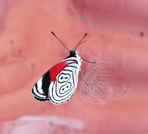 Mariposa 88