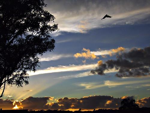 trees bird silhouette clouds sunrise geotagged magpie portmacquarie geo:lat=31439168 geo:lon=152897184