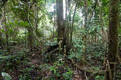 Jungle | by LollyKnit