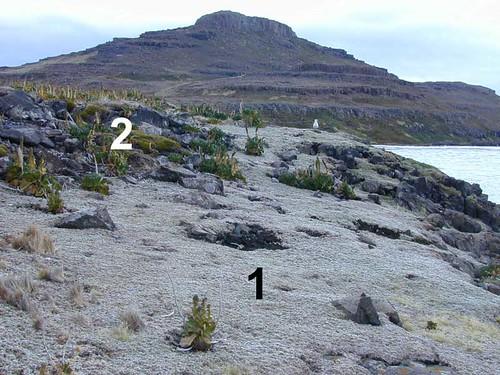 voyage geotagged côte végétation kerguelen stationalpinejosephfourier geo:lat=49329597 geo:lon=7018753