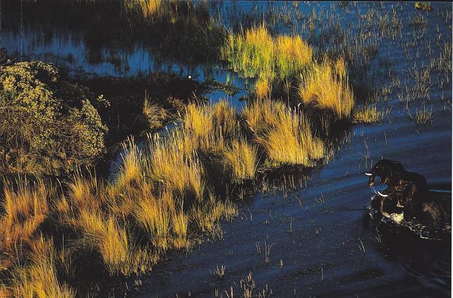 Botswana Elephants Postcard