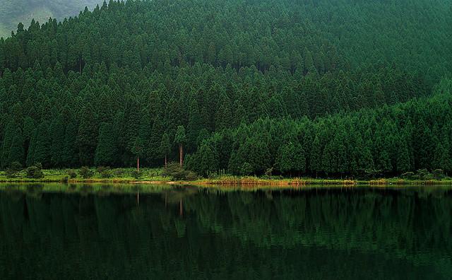 湖畔の樹林 - LAKE SIDE WOODS -