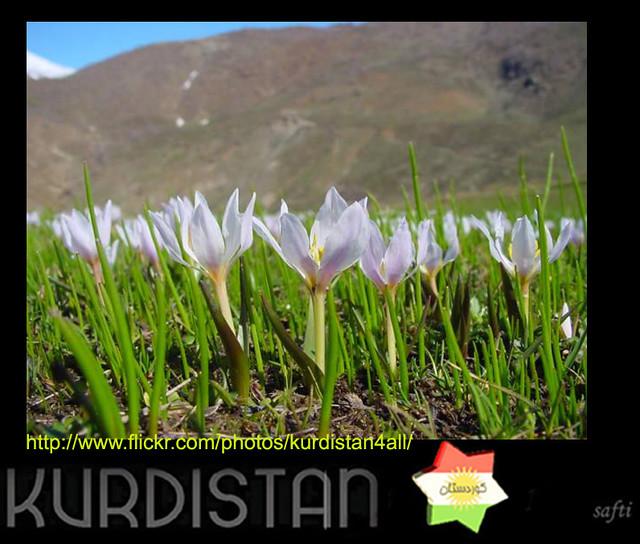 kurdistan  Çawciwan