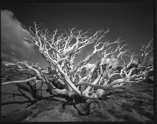 film 8x10 schneider snowgum charlottepass superangulon tachihara gelatinsilver aristaeduultrafbvc fomabrom200 121mmf8
