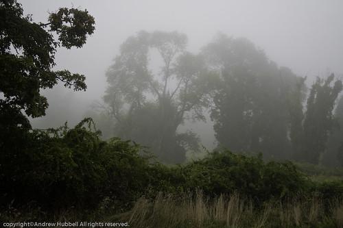 morning summer nature fog sunrise landscape flora canoneos350 ridgefieldtownpasture ©andhuballrightsreserved