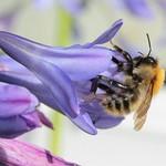 IMG_1049 bee