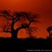 Angola | Sunsets